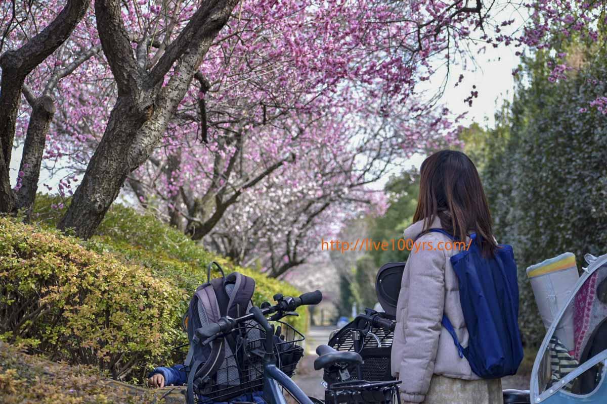 2019大宮公園梅まつりに子供と自転車で行ってきました