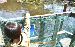 北本キャンプフィールドでは鯉にえさあげ体験ができました