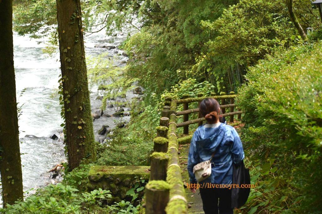 奥多摩ふれあい森林浴コースを散策しました