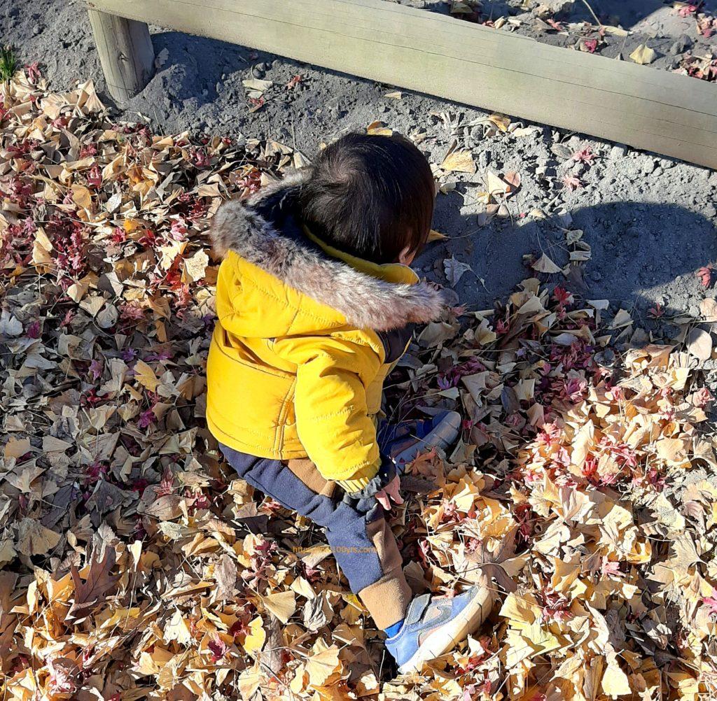 千葉県野田ポニー牧場内で落ち葉遊び