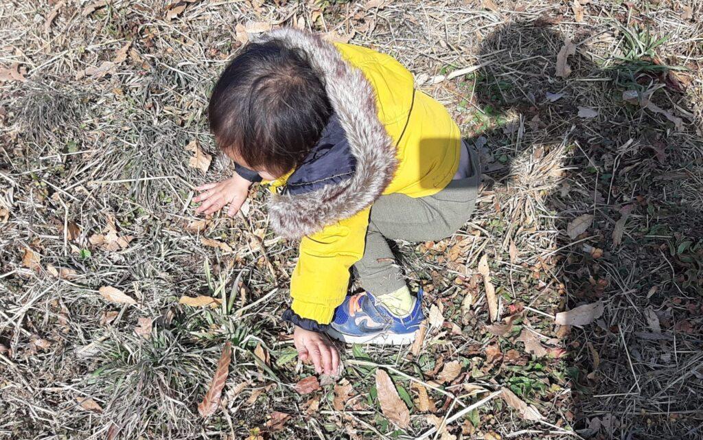 落ち葉の感触を楽しむ1歳児