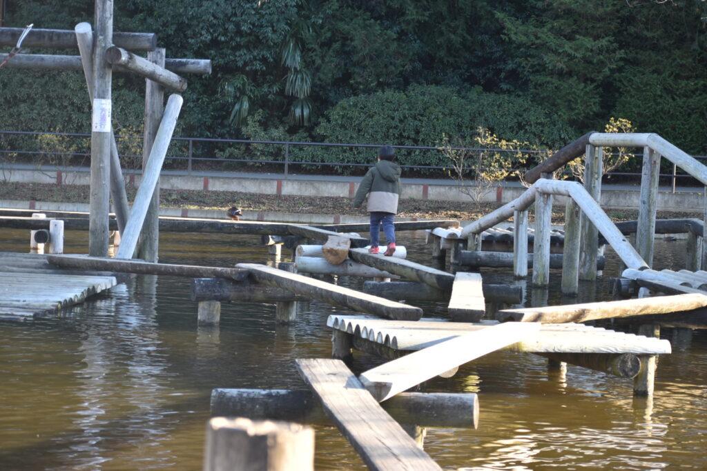 清水公園のフィールドアスレチック、水上コースを頑張る6歳児