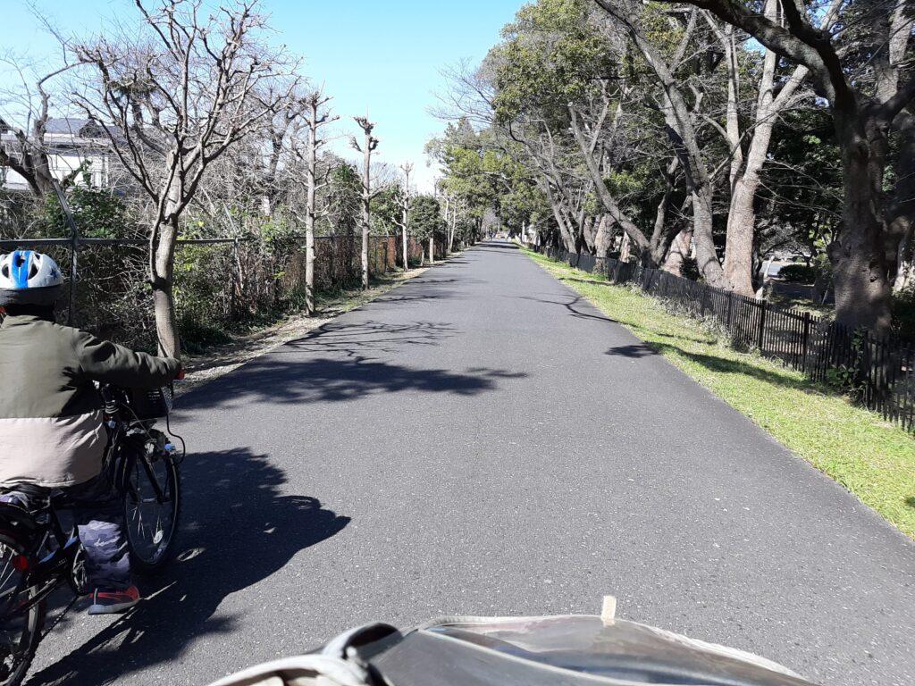 見沼用水路西縁から大宮第二公園に入ります