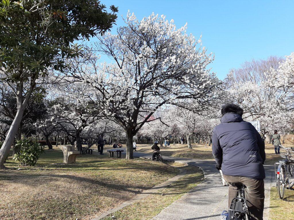 2021年の大宮第二公園にサイクリングで訪れました